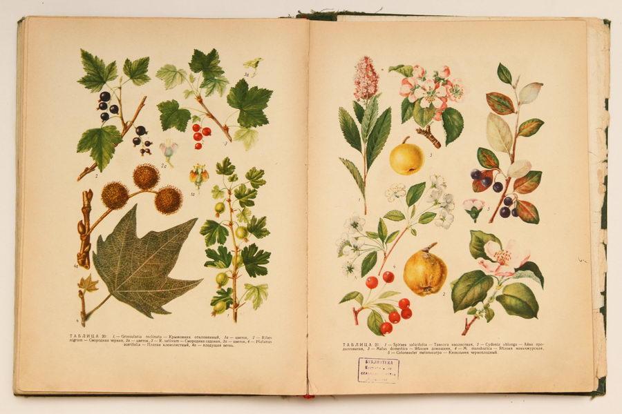 ботаническая энциклопедия растений с иллюстрациями длительного горения